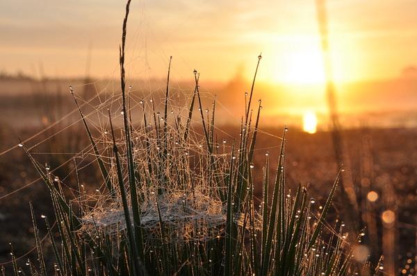 zon en mist vanmorgen in zuidoost Brabant #buienradar