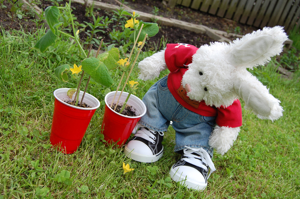 Rufus: iz gonna plant cucumbers..OOPS! Zackary: WAHT DID U DO??!!