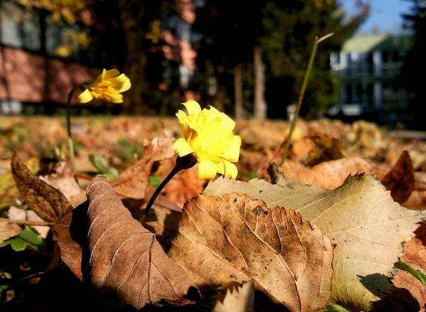 Késő őszi napfürdőzés