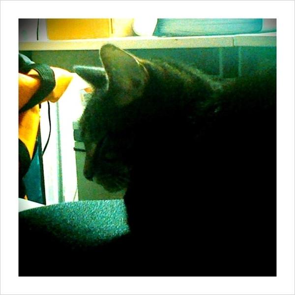 Kitty faux-mo