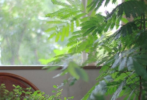 ✎︎___________ Friday... ・ ・ ・ #エバーフレッシュ  #ytmh_green  #ytmh___2016  #アカサヤネムノキ  #60d  #carlzeiss  #planar ✎︎____________ 皆さん良い週末を...