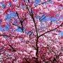 もう桜の時期だぁ😊🌸 すてきな恋がしたいなぁ♩