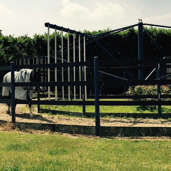 Uniek N.O.P. his cooling down today. He did a very good job @training with @dorienvdlee #sunnytime