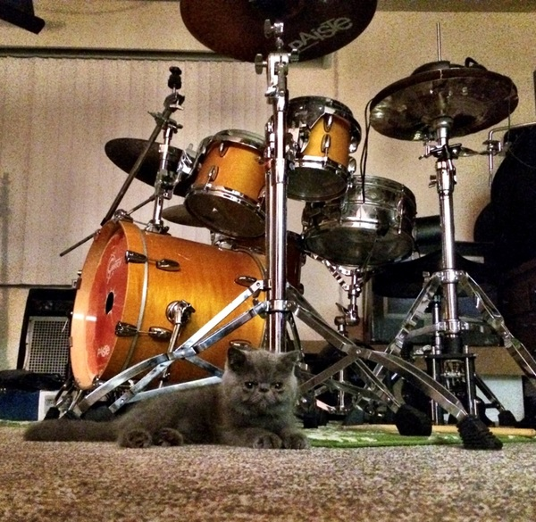 Mr Pineapples protecting the drums: