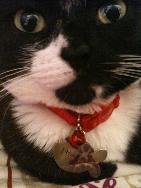 My cat is soooo cute