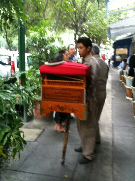 Organ grinder outside Contramar: century old instrument. Biggest collection in world is here in DF