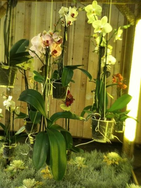 Hangende tuinen met orchideeën op #MWF @watbloemendoen @nieuwsvanalpha