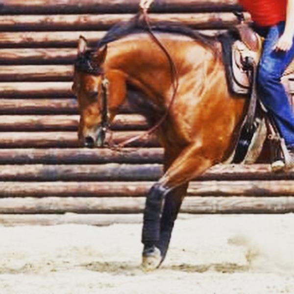 Para Reining @NK Schijndel! I'm one of the competitors! @horses link #newchallenge #demo #nextweek http://www.horses.nl/sport/overige-disciplines/para-dressuurruiters-aan-de-start-op-nk-reining/
