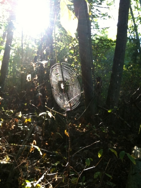 Trail run at Discovery Park today with spider webs. #iPhone