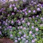 Mooie bloemen in bloei #buienradar