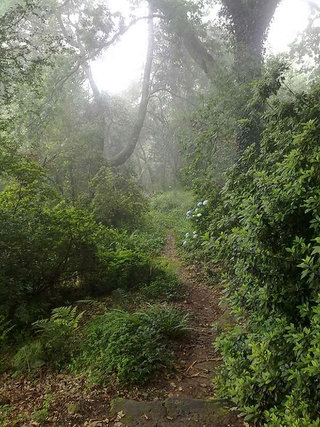 A forest walk in Hogsback- Its easy to see why this place inspired Tolkien's writing.