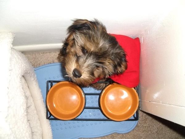 #ImSorryBut my dog shits on urs