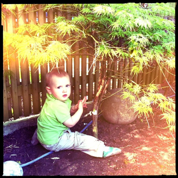 Fletcher of the day: Fletcher and the Japanese maple