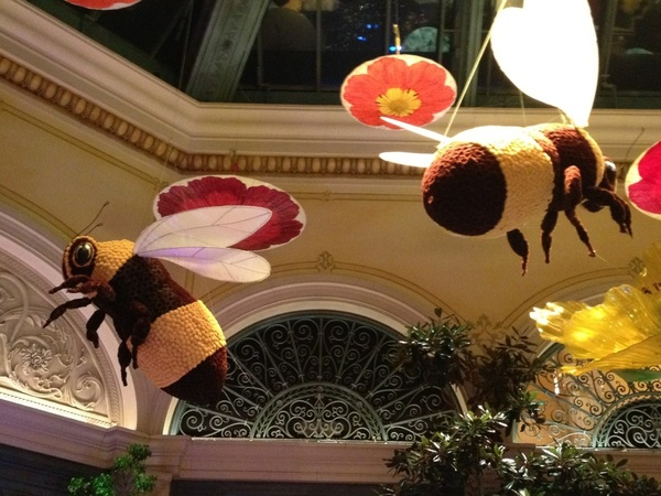 Buzzin around Vegas, showing my cuz around-she's so cute & in amazement lol (these are all flowers)