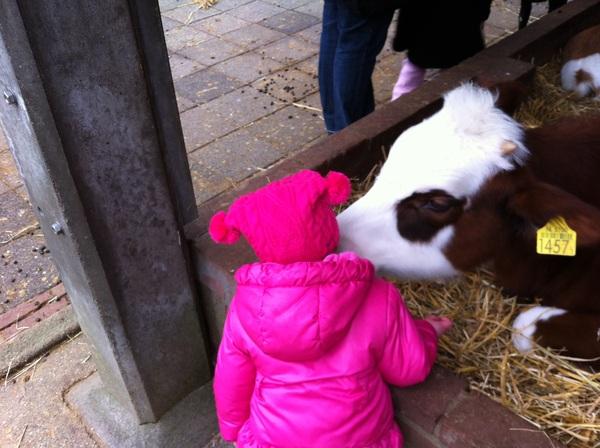 Miss E. kissing a cow