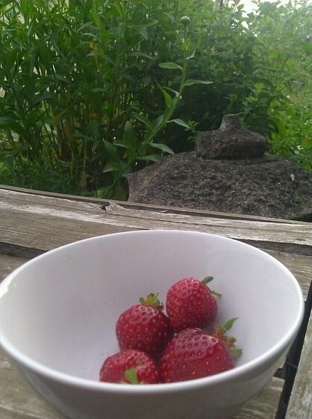 More strawberries from our garden! (And it looks like I missed a few that were already past eating.)
