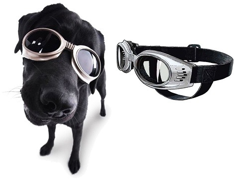 @wossy look! DOGGLES!!!!