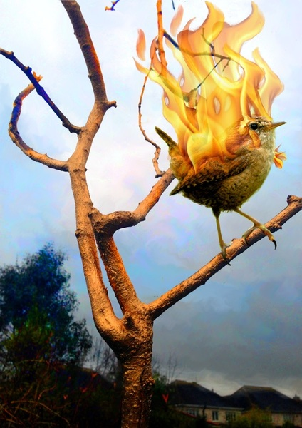 "Happy Christmas to one and all.....  Image entitled ""May The Fire Burn"""