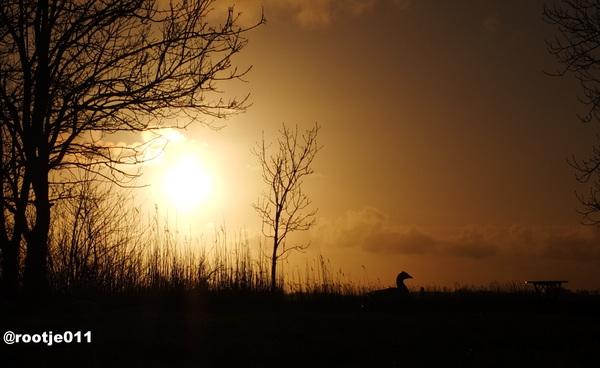 27-02 2015  Gouden sunset !  Gans met de gouden eieren?  #buienradar