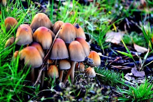 Groepje #paddenstoelen#herfst #buienradar