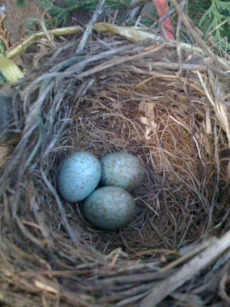 "@twittelator ~> i showed my son a birds nest in my backyard and he said "" that looks like that icon on your iPhone"" :)"