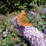 Vandaag begint de Herfst, met deze prachtige vlinder. #buienradar