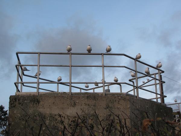 Alle ogen gericht op..... #buienradar