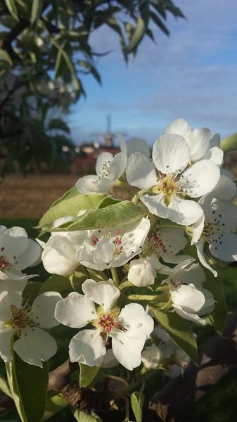 prachtig bloei weer dat hebben we nodig ;)  #buienradar