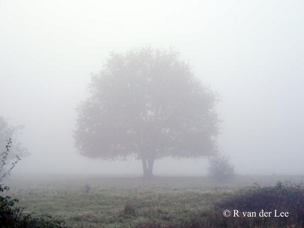 Mist in de Maashorst nabij Uden. Heerlijk rustig daar om 07:00 uur. #buienradar