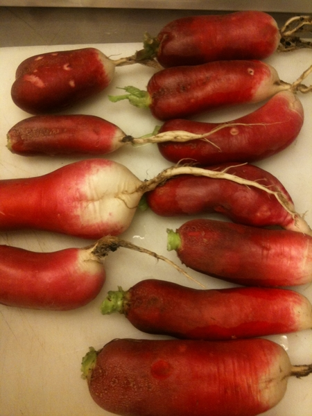 Beautiful radishes from City Farm getting pickled in Tamazula for Sunday Farmer Fndn Benefit dinner