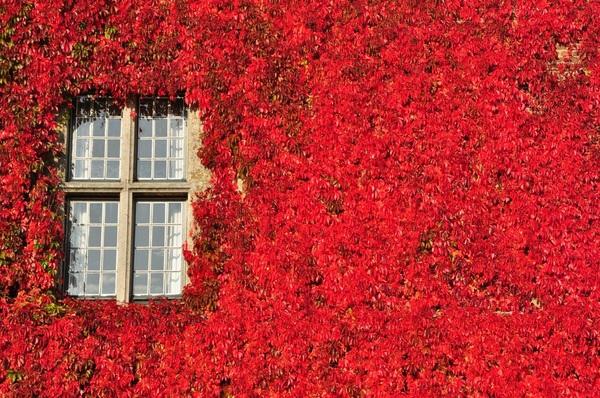 Kesteel van Rullingen in Borgloon kleurt volledig rood in de #herfst #buienradar