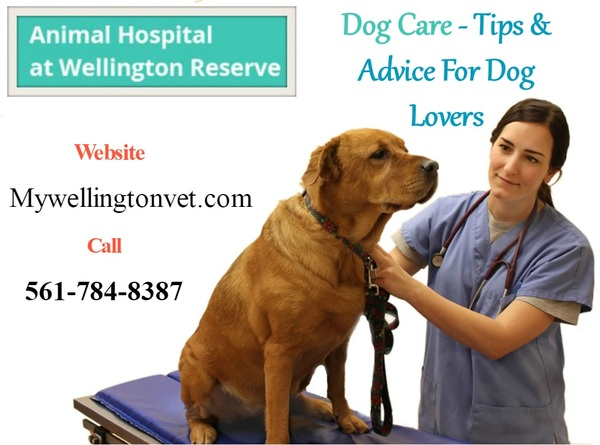 dog care and behavior wellington fl by mywellington vet