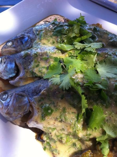 San Rafael Winery: Luy made smoked local trout w creamy cilantro mayo; grilled calabacita mash