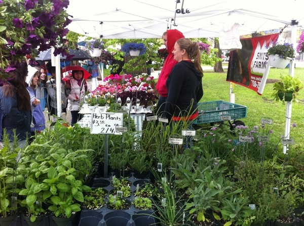 Cold and drizzly morning at Green City Market. Bit good crowd of chefs, die-hard cooks and gardeners!