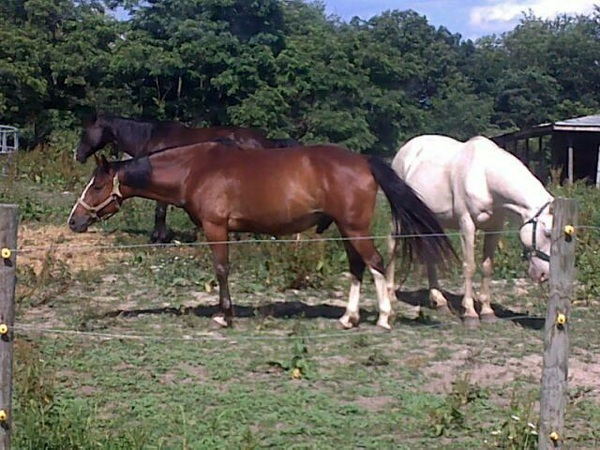 Another picture of my neighbors horses!! They are beautiful!