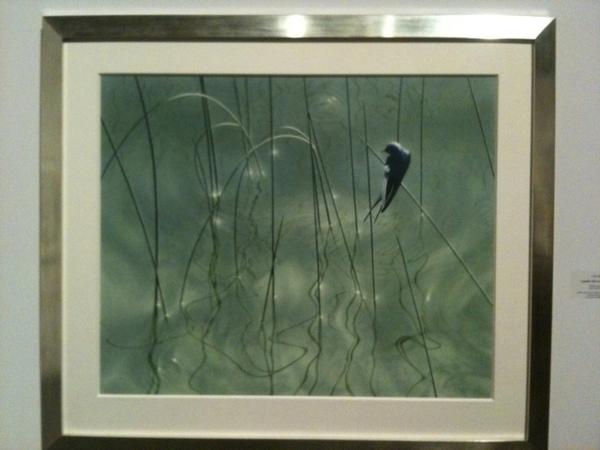 Liquididity ( Barn Swallow), 2010. By Chris Bacon. Acrylic.
