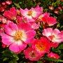 Wie kent dit bloementje...vrij grote struiken barstensvol bloemen en mooi om te zien...Veeneendaal Kerkewijk  #buienradar