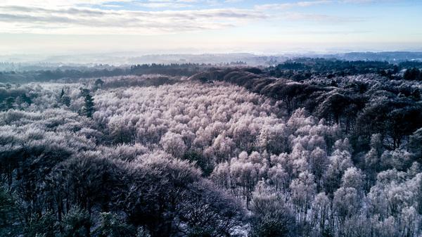 Doorn   Kaapse Bossen   11:00  De rijp, bevroren mist, hangt aan alle boomtoppen in het bos. Met de nog lage mist in de ondergrond en achtergrond is het net een fantasiewereld. De wolken geven het plaatje net even wat accent en het diffuse licht. #buienradar