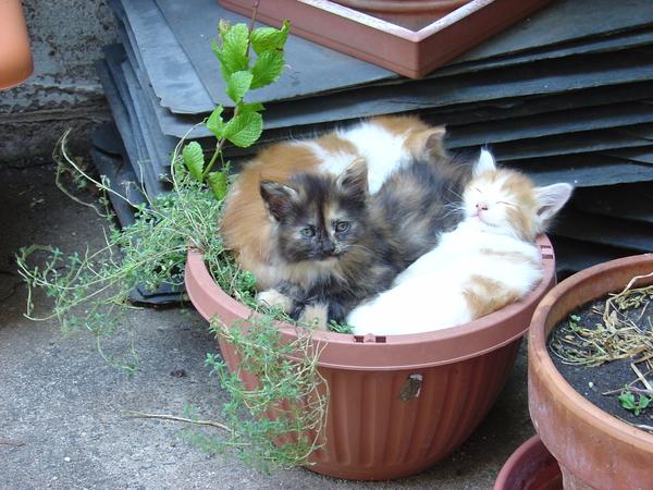 Planter o' Kittens