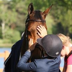 Ulena 2nd in the 1.45m Longines Ranking at CSI** Roosendaal #tophorse #daravanderwerf #cwd #ruitersinoranje