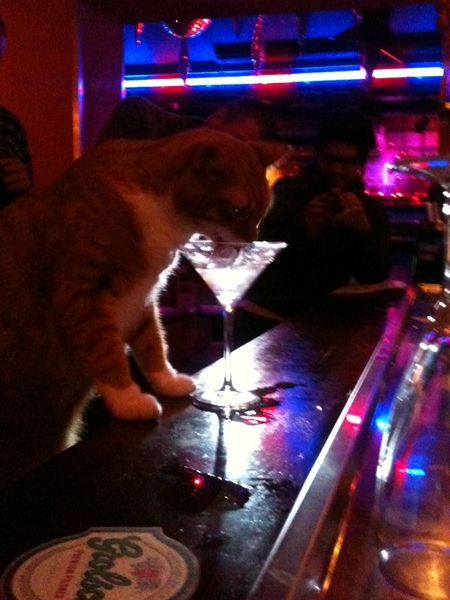 Can I haz drink pls? #kitteh prefers to drink fro