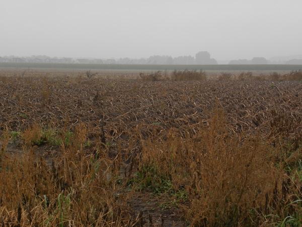 Aardappelveld #buienradar