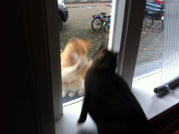 This cat is taunting Freddy