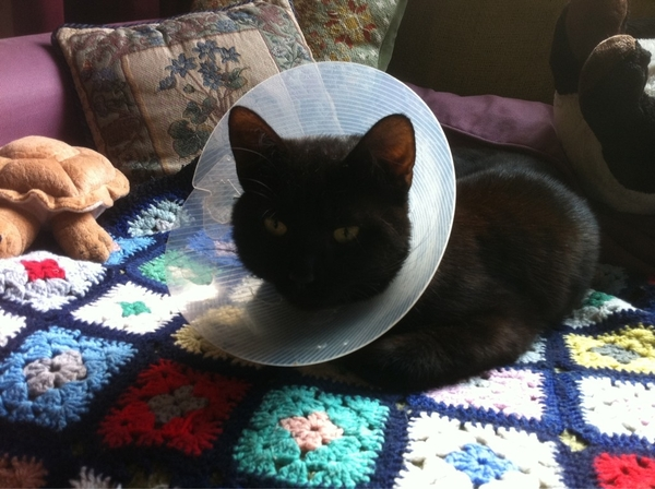 @TheSchoolOfLife My cat's asking - with his eyes - when the post-op conical collar is coming off!