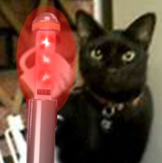 #pawpawty Cat In Black - Look at the device... you've be...