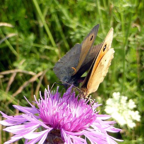Do you love me? #vlinders #natuur #sex
