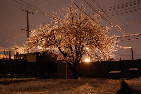 our frozen apple tree