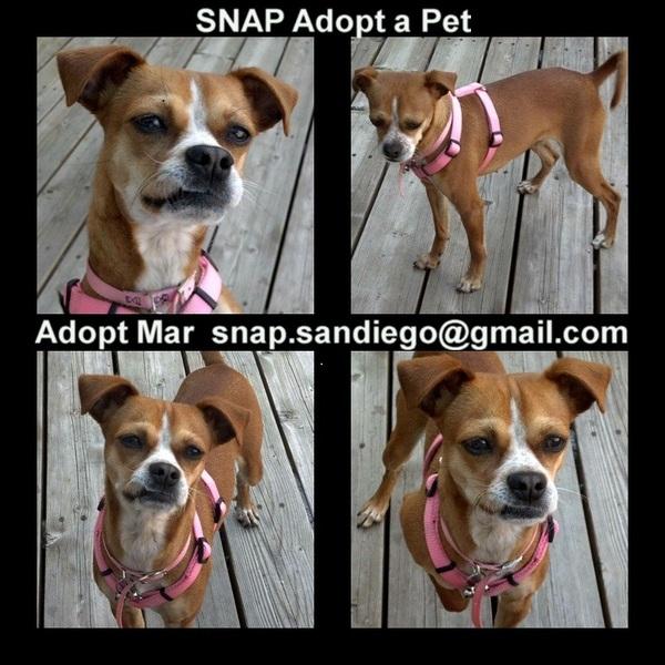 Adopt Mar SNAP Adopt a Pet http://snapadoptapet.bravesites.com