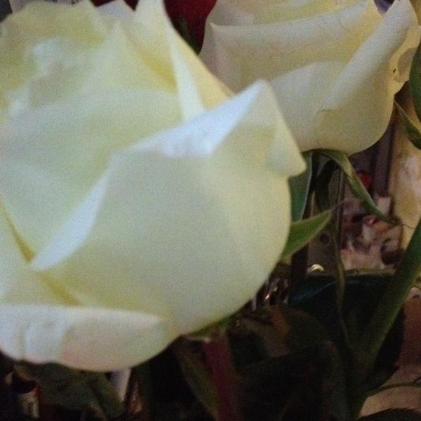 """""""Regálenme flores cuando esté muerta"""" ... Empezando a cumplir promesas una de muchas..."""