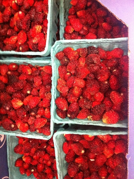 From Seedling Fruit Farm: some of the BEST fraises des bois I've had